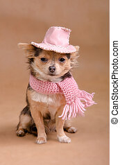 porter, rose, charmant, chihuahua, chiot, chapeau, écharpe