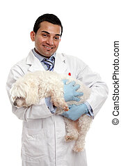 porter, vétérinaire, chouchou, chien