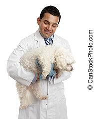 porter, vétérinaire, petit chien