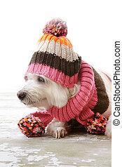 porter, woollen, habillement, chien, hiver