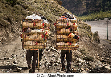 Porters transporting chicken in cages