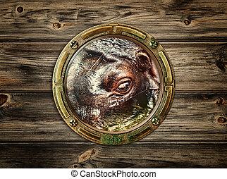 porthole with hippopotamus