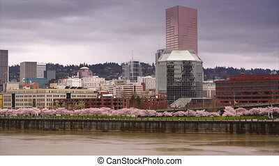 Portland Oregon City Skyline Spring Cherry Blossoms...