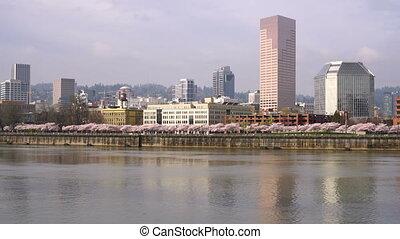 Portland Oregon City Skyline Spring Cherry Blossoms...