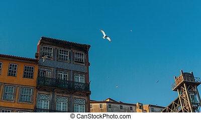porto, 建物, 古い, ダウンタウンに, portugal., 家