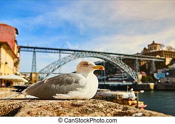 porto, assied, vieux, remblai, portugal, dom, fond, douro, luis, mouette, rivière, pont