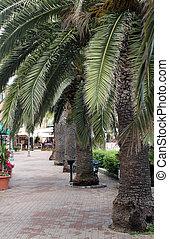 Porto Azzurro, seafront with palm trees