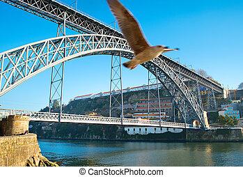 Porto bridge and seagull