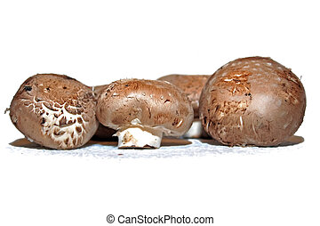 Portobello Mushrooms isolated on white background.