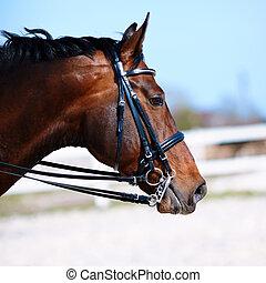 porträt, horse., sport
