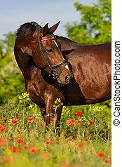 porträt, pferd, blumen