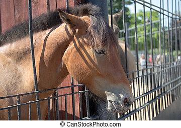 porträt, pferd, closeup, bucht
