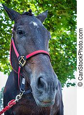 porträt, pferd, closeup, sommer