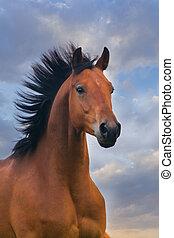 porträt, pferd, sonnenuntergang, bucht