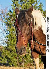 porträt, pferd, weihnachten
