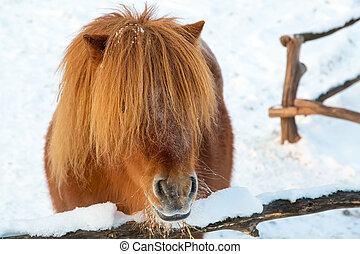 porträt, pony, rotes