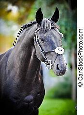 porträt, schwarz, trakehner, pferd, auf, grüner hintergrund, in, sommer