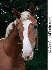 porträt, von, junger, pferd, auf, grüner hintergrund