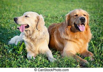 porträt, von, zwei, junger, schoenheit, hunden
