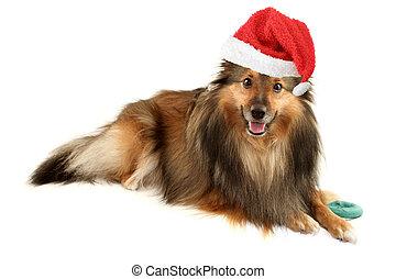 porträt, weihnachten, hund