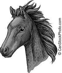 portræt, hest, sort, anføreren, skitse