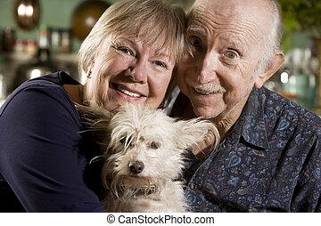 portræt, i, senior kobl hund