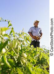 portré, ember, farmer, aratás, paradicsom, mező, külső