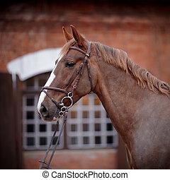 portré, közül, egy, piros, horse.
