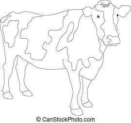 portré, nagy, black white tehén, ve