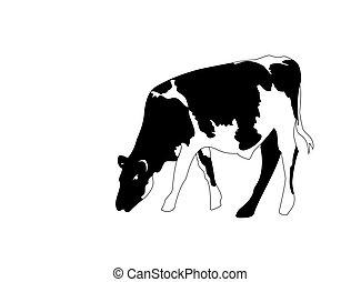 portré, nagy, black white tehén, vektor