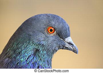 portrait a pigeon