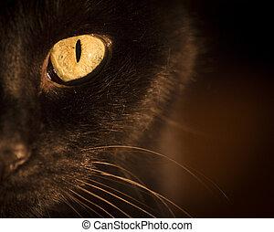 Portrait black cat