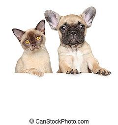 portrait, blanc, bannière, chien, chat