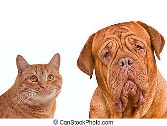 portrait, brun, gros plan, chien, chat