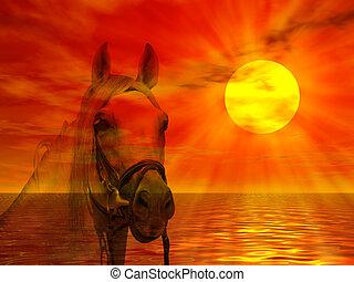 portrait, cheval, coucher soleil