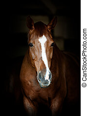 portrait, cheval