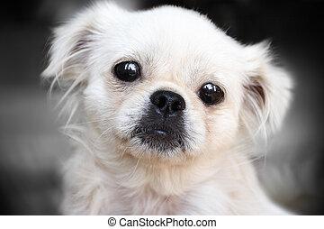 portrait, chien