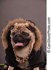 portrait, chien pug