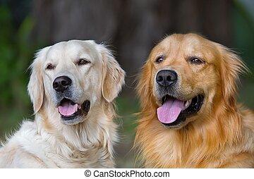 portrait, chiens, jeune, beauté, deux