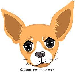 portrait, chihuahua, avatar
