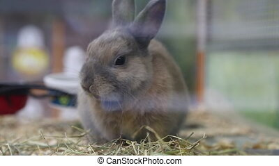 Portrait cute rabbit eating hay