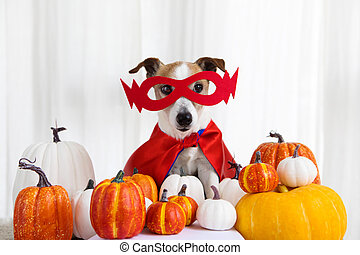 Portrait cute young small dog sitting with halloween costume and pumpkins
