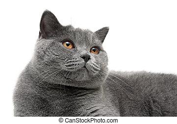 beau gris yeux chat jaune clair closeup fond images de stock rechercher des photos. Black Bedroom Furniture Sets. Home Design Ideas