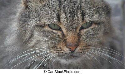 portrait dissatisfied evil homeless cat on the street...