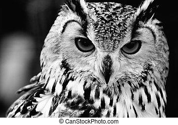 portrait, eurasien, haut, eagle-owl, fin