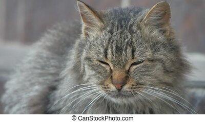 portrait evil dissatisfied homeless cat on the street...