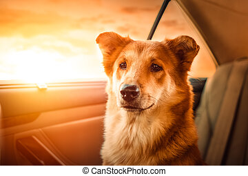 Portrait Happy dog traveling in the car.