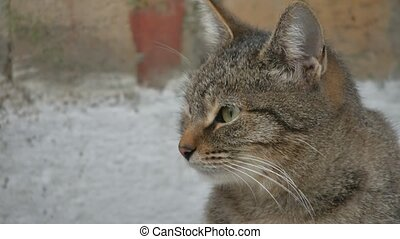 portrait hungry homeless cat on the street close-up looks...