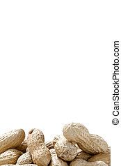 group of monkey nuts