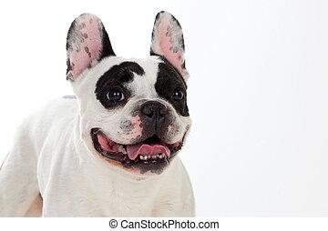 Portrait in Studio of a cute dog